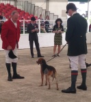 Hounds competing at the Great Yorkshire Show 2014